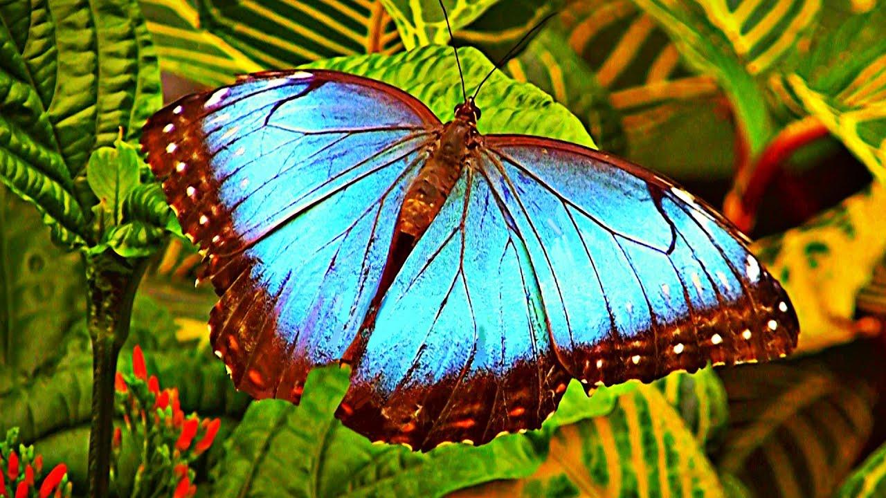 Papillons en libert au jardin botanique de montr al youtube for Papillons jardin botanique 2016