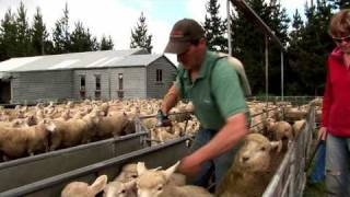 English Farmer In Nz