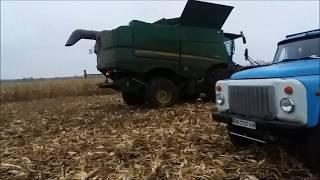 Кукуруза Маис сорт Новый