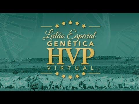 Lote 14   Espirita FIV HVP   HVP 1407 Copy