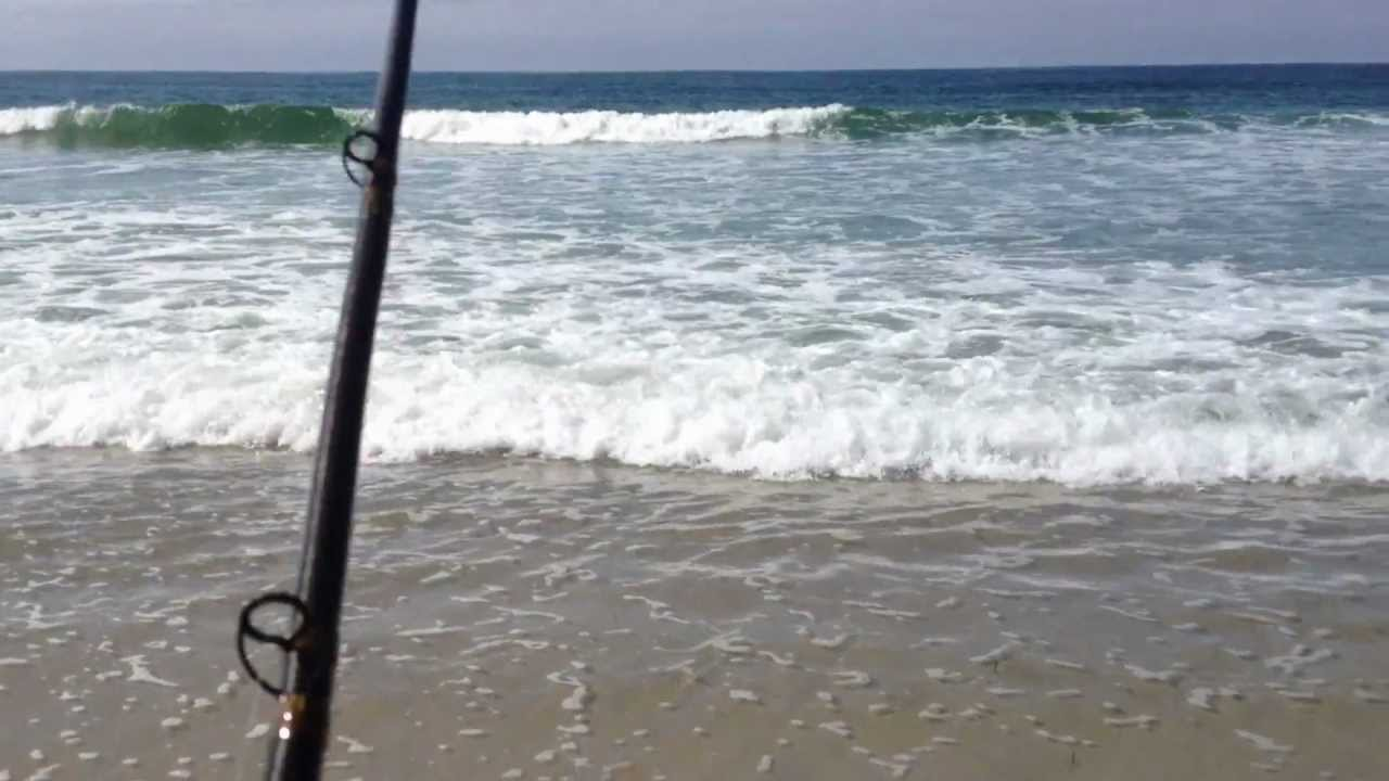Surf fishing for leopard sharks in san diego part 2 youtube for Fishing license san diego