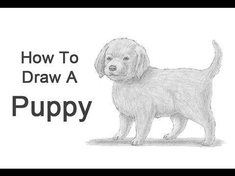 How to Draw a Puppy - YouTube