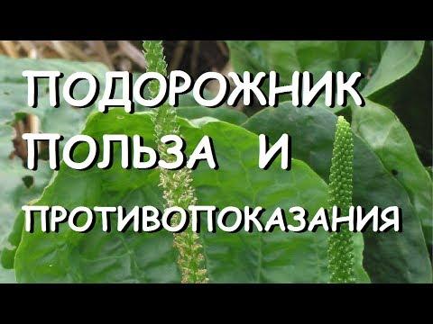 Лекарственные травы на букву В