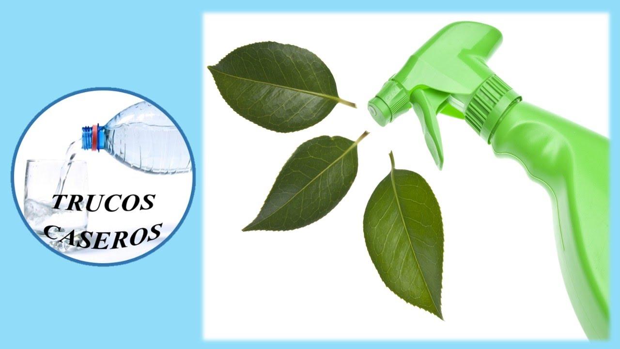 Como hacer un limpiador casero ecologico y natural - Productos de limpieza ecologicos ...