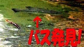 【バスフィッシング】春のビッグママを追え!#6~バス発見!デカ目のルアーで狙う!~ thumbnail
