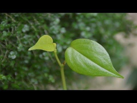 Пересадка растений в июне.  Интересные растения!
