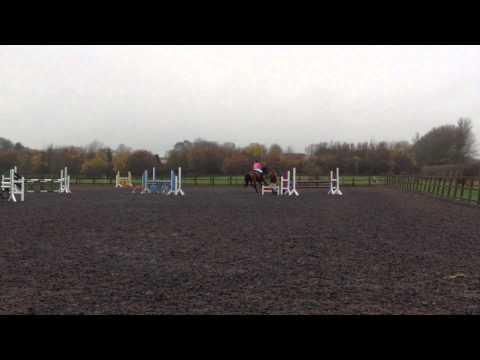 95cm speed class at Elms Farm