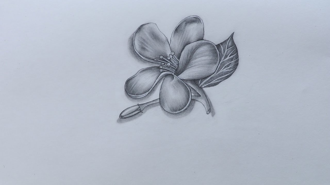 how to sketch jasmine flower youtube