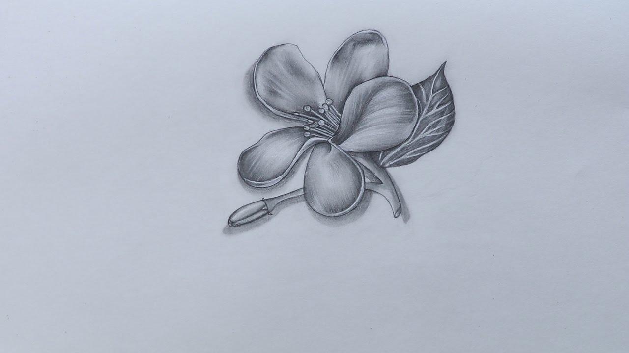 mogra flower drawing » Best Artist 2018 | Best Artist