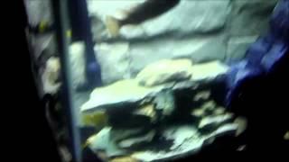 Diy Rock Cave & 3d Aquarium Background