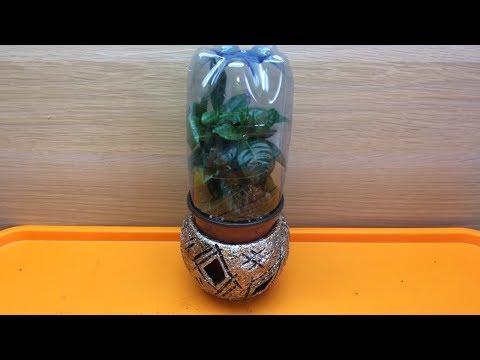 Гардения жасминовидная размножение черенками в домашних условиях. Гардения грунт, полив и уход дома.