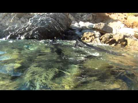 Un suivi en apnée d'une population de mérous bruns de Port-Cros (2016)