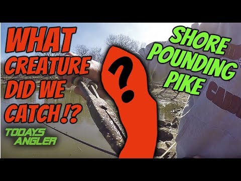 WHAT CREATURE Did We Catch!? - Shore Pounding Pike - Todays Angler