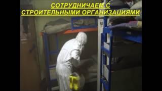 уничтожение насекомых в Москве ПРОФИ ДЕЗ 8 495 776 05 15(Компания
