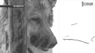 Яша Боярский: Глаза собаки (сл./муз. Яша Боярский)