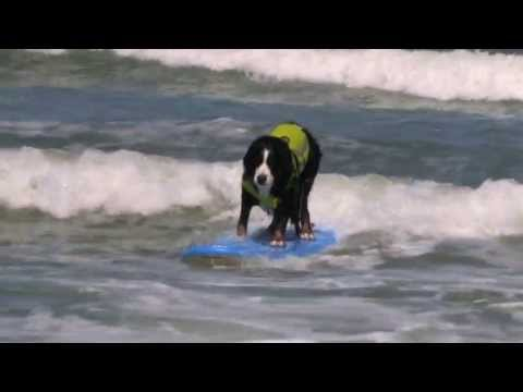 Rose Parade California Surfing Dogs AMAZING Surf Dog Champions!