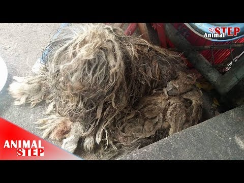 Rescued A Homeless Dog with Matted-Hair – Watch Her Warmest Life at The End!