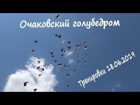 Очаковский голубедром. Тренировки голубей 18.06.2019
