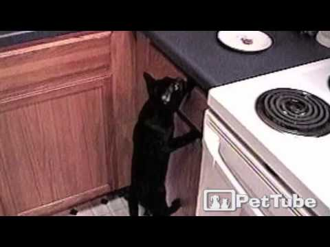 Sneaky Black Cat Is King of the Cabinet – PetTube