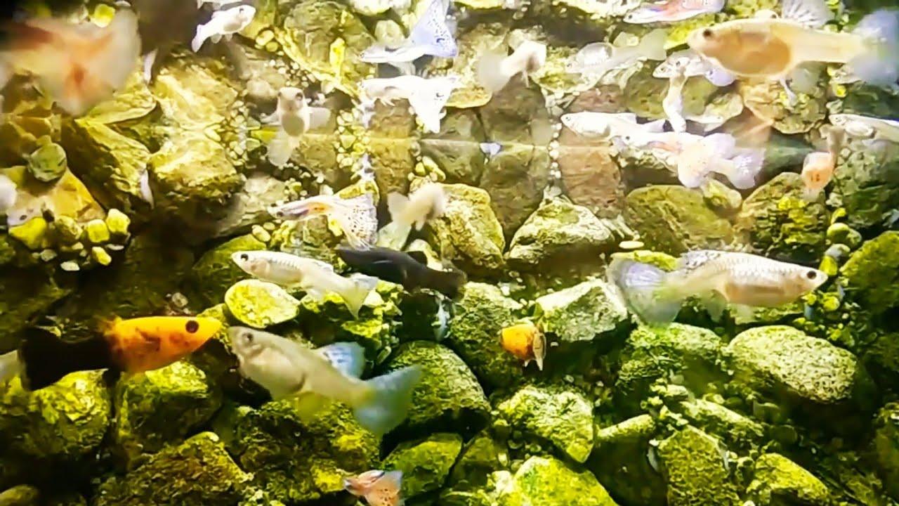 Mini Aquarium