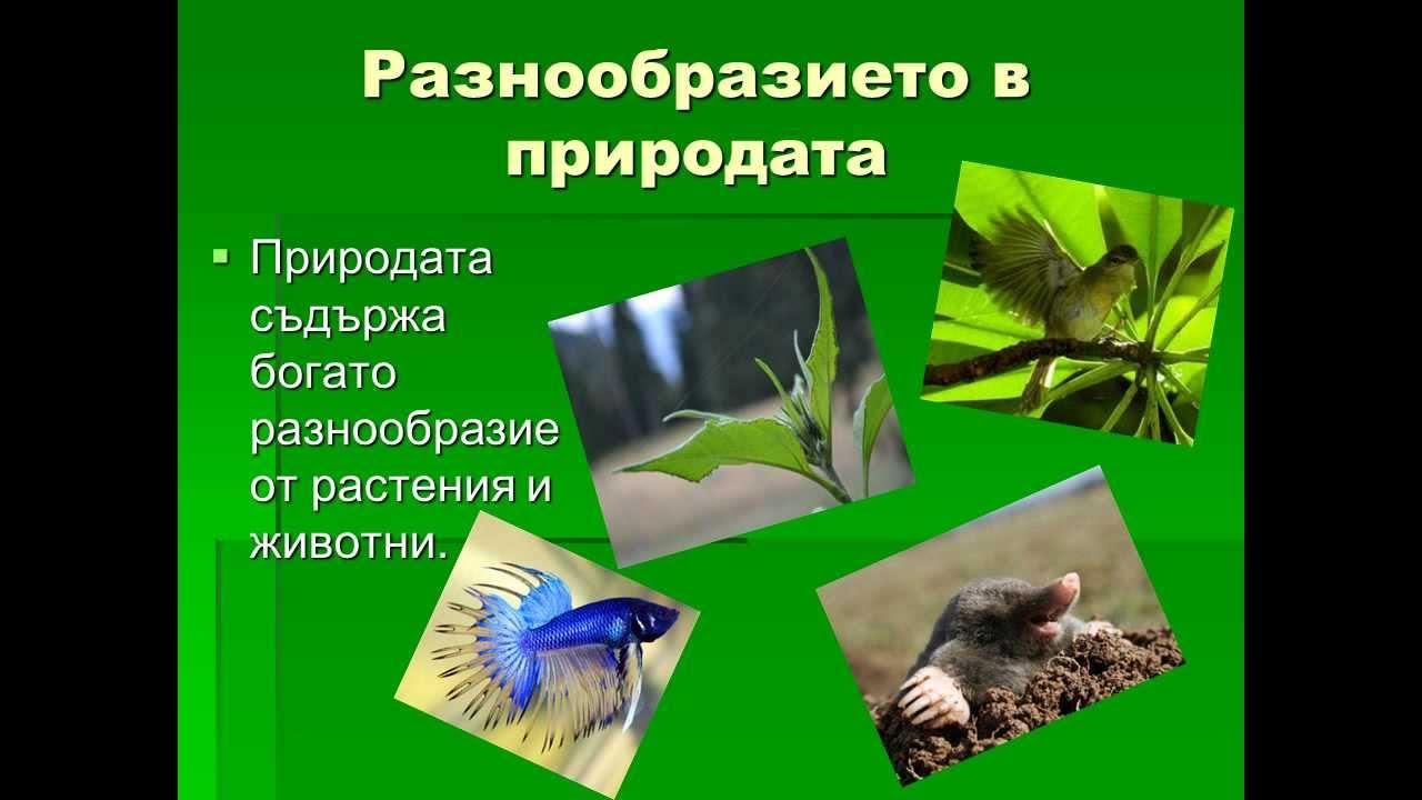 Картинки про природу рб