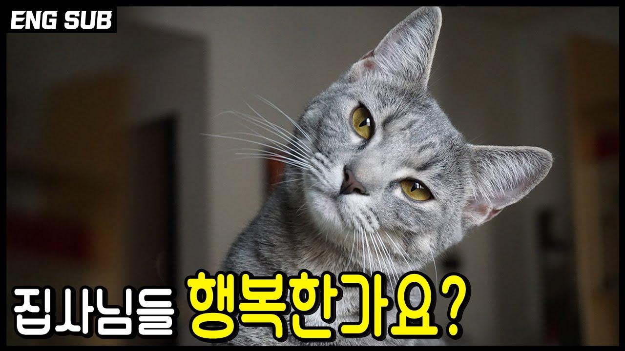 여러분은 지금 행복하신가요? 집사가 행복해야 고양이도 행복하다.