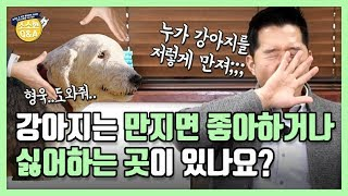 [Eng sub] Do dogs have a spot where they like or dislike to be touched? Hunter Kang's Q&A