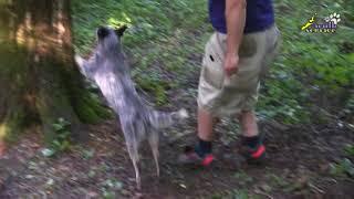Хилер Чери, раскачка по деревьям, дрессировка и мотивация