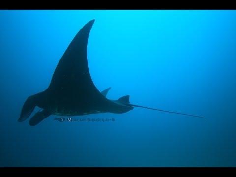 Let's Dive in Raja Ampat . 潛進世界的盡頭
