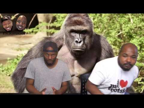 Harambe The Gorilla Killed, Prince Died Of Opioid Overdose, Thoughts Of Roots 2016