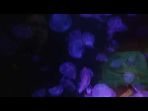 Fun times at Denver Aquarium(13)