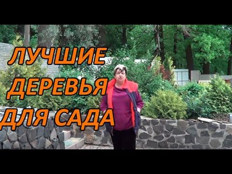 Лучшие Деревья Для Сада ( Облепиха, Шефердия, Лох Серебристый, Гуми)