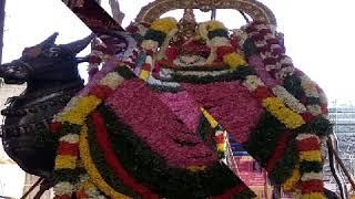 ஓம் நம சிவாய சிவ ராத்திரி அன்று சிவனை தரிசித்து அருள் பெறுங்கள்