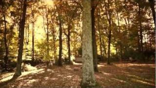 A Stroll Through the Backyard - Sony NEX5-N - Slo Mo