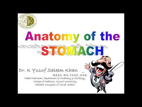 Lecture on Anatomy of Stomach............ by Dr. Yusuf
