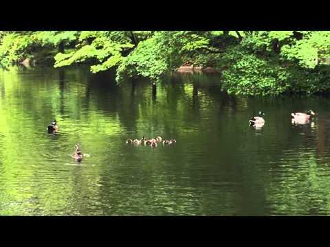 Japanese garden pond, Fort worth, Tx