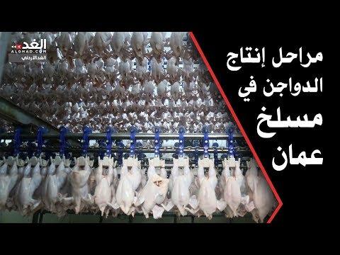 مراحل إنتاج الدواجن في مسلخ عمان  - 15:20-2017 / 9 / 24
