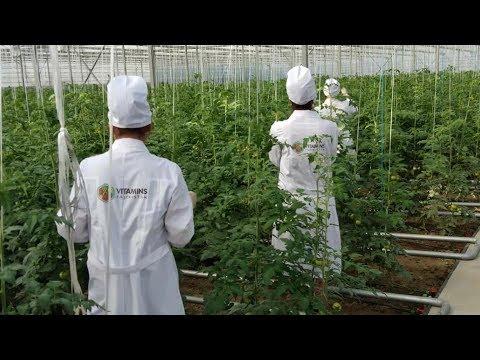 Таджикистан ждет богатый урожай овощей и фруктов даже зимой