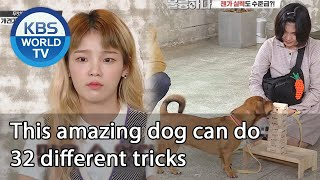 This amazing dog can do 32 different tricks (Dogs are incredible) | KBS WORLD TV 201021