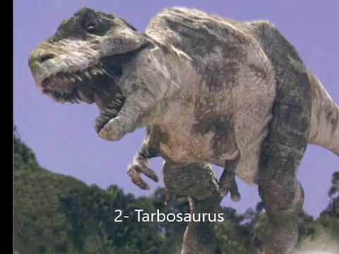 Top 10 Tyrannosaurs!!!