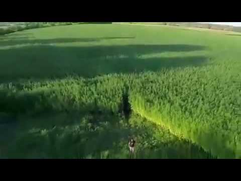 hemp field in EU