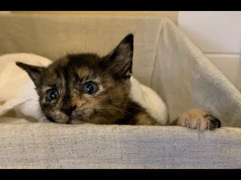 У спасённой кошки родилась её копия, довольно нахальная копия!)