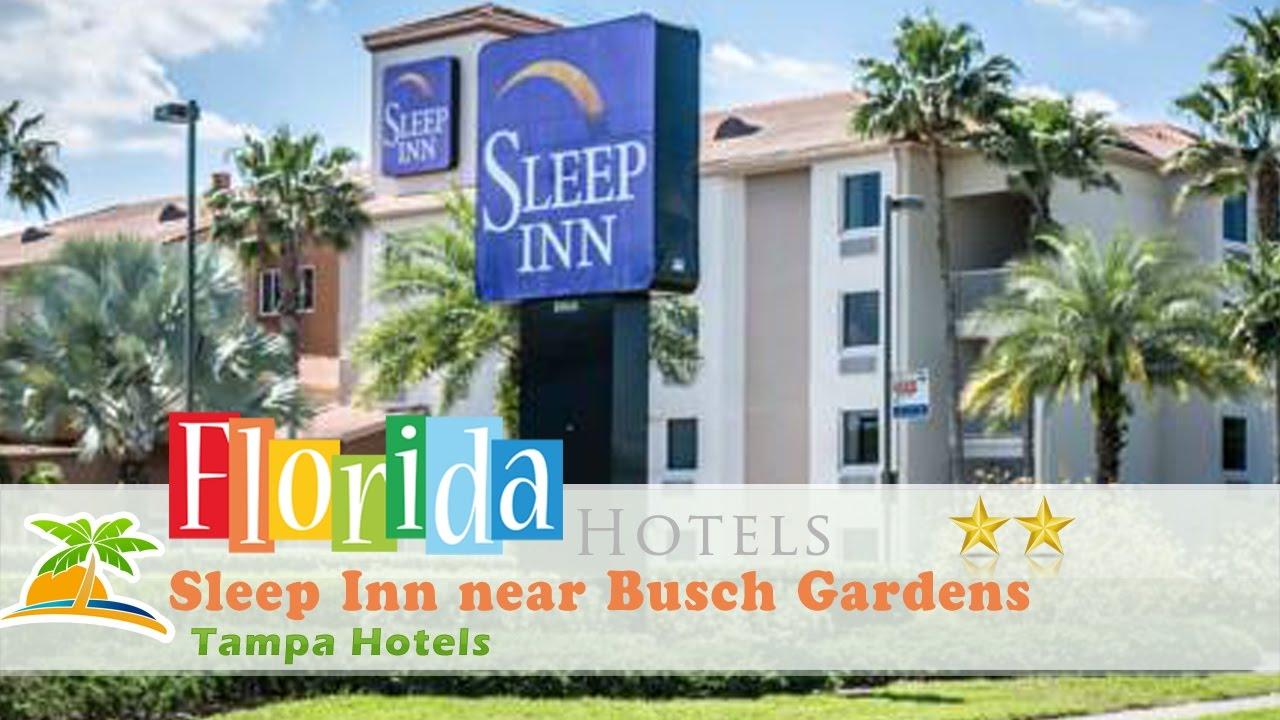 Sleep Inn near Busch Gardens USF Tampa Hotels Florida YouTube