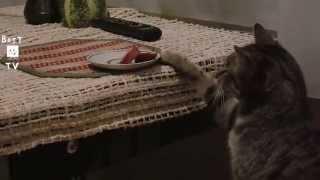 Смешные домашние животные 2015/ Смешные видео про котов/ Смешные коты 2015/ Funny cats 2015