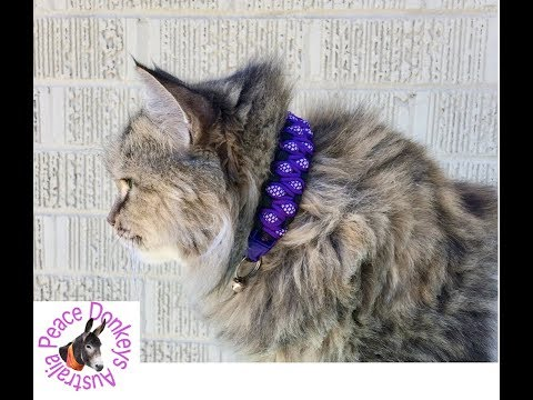 how-to-make-a-paracord-cat-collar---stitched-solomon's-dragon