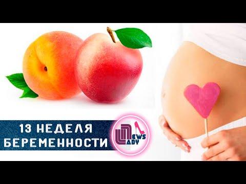13 Тринадцатая неделя беременности
