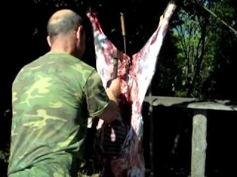 """Résultat de recherche d'images pour """"sanglier découpé par les chasseurs"""""""