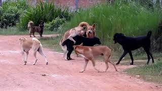 Amazing Smart Rural Dogs !! Dog Meeting for the Summer Season in Village.