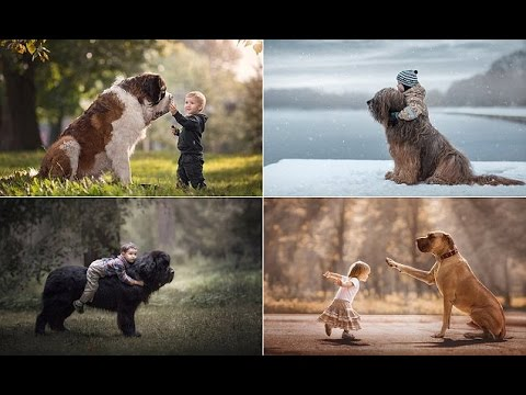 Incredible Huge Dogs Gently Playing With Their Tiny Toddler Pals - Tiny children and their huge dogs photographed in adorable portraits by andy seliverstoff