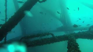 Sea Serpents - Shannon & Chet